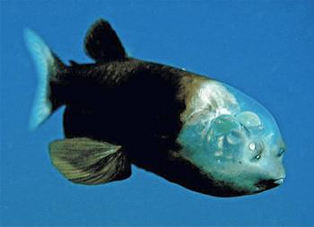 Weird Fish Skull 4